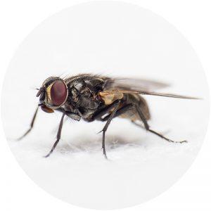 insektenspray-kategorie